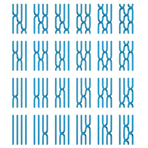 Computer-quantistici-Braid